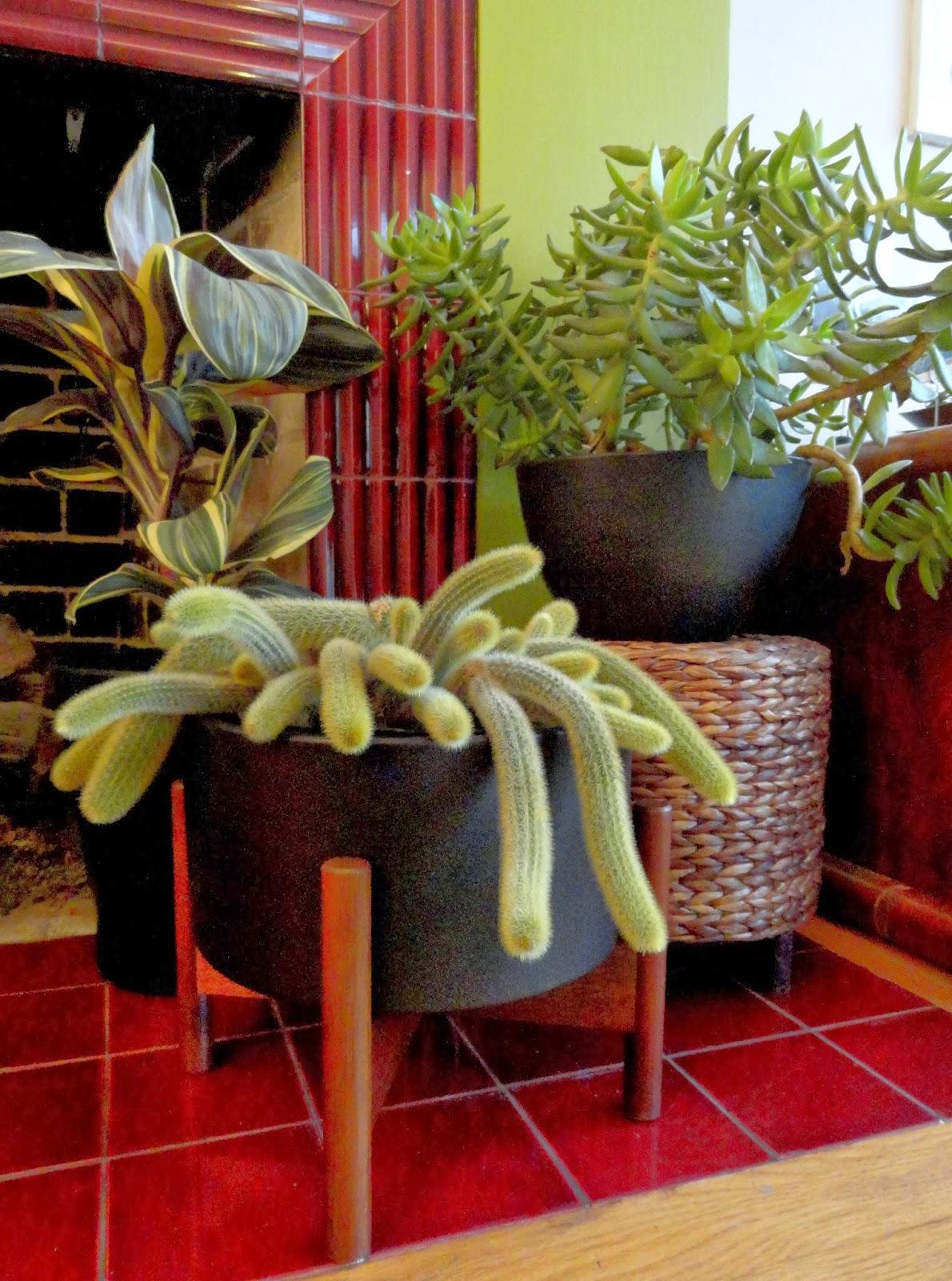 danger garden planting up my case study ceramic planter from modernica