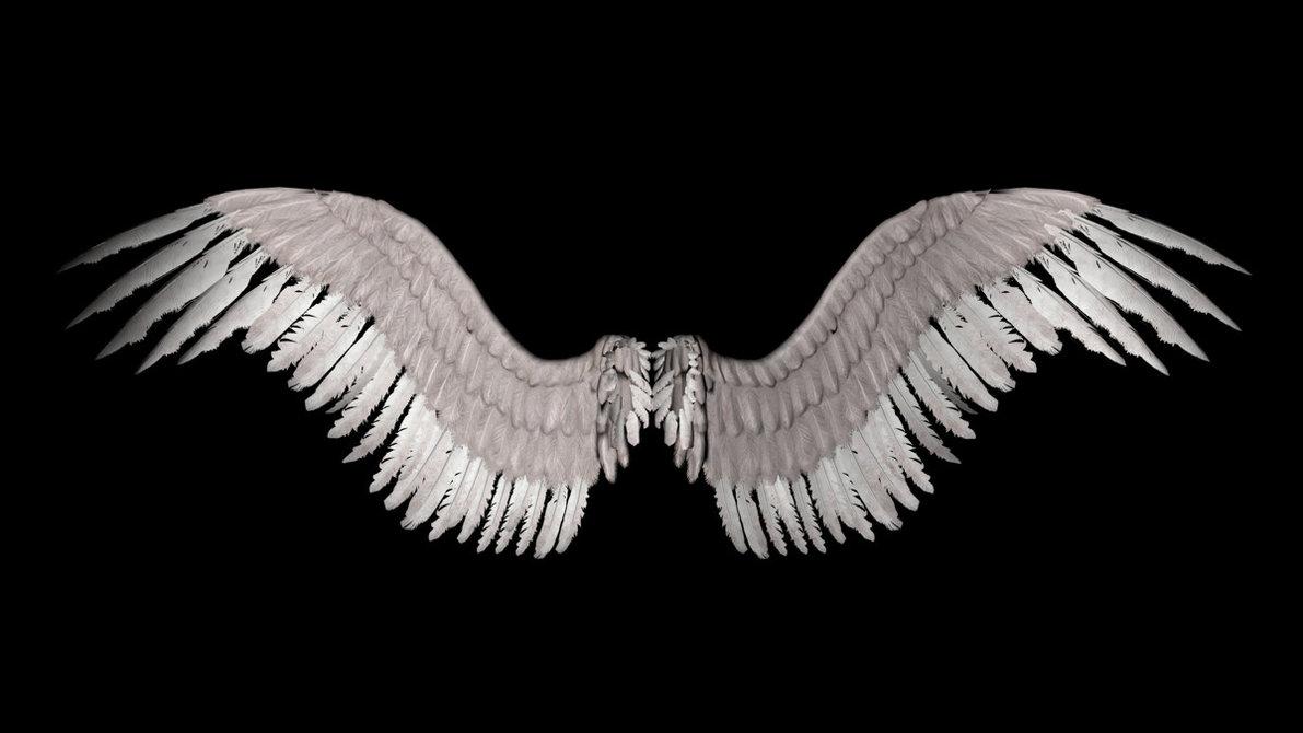 MyRawr: Falling feathers