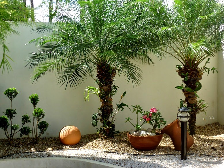 plantas para jardim muito sol:Palmeira Fênix-durona, muito resistente.