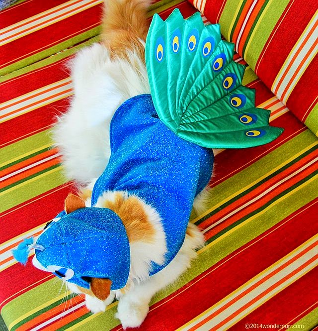 Herman models full body of peacock costume.