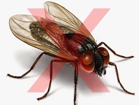 mengusir lalat alami, cara membasmi lalat