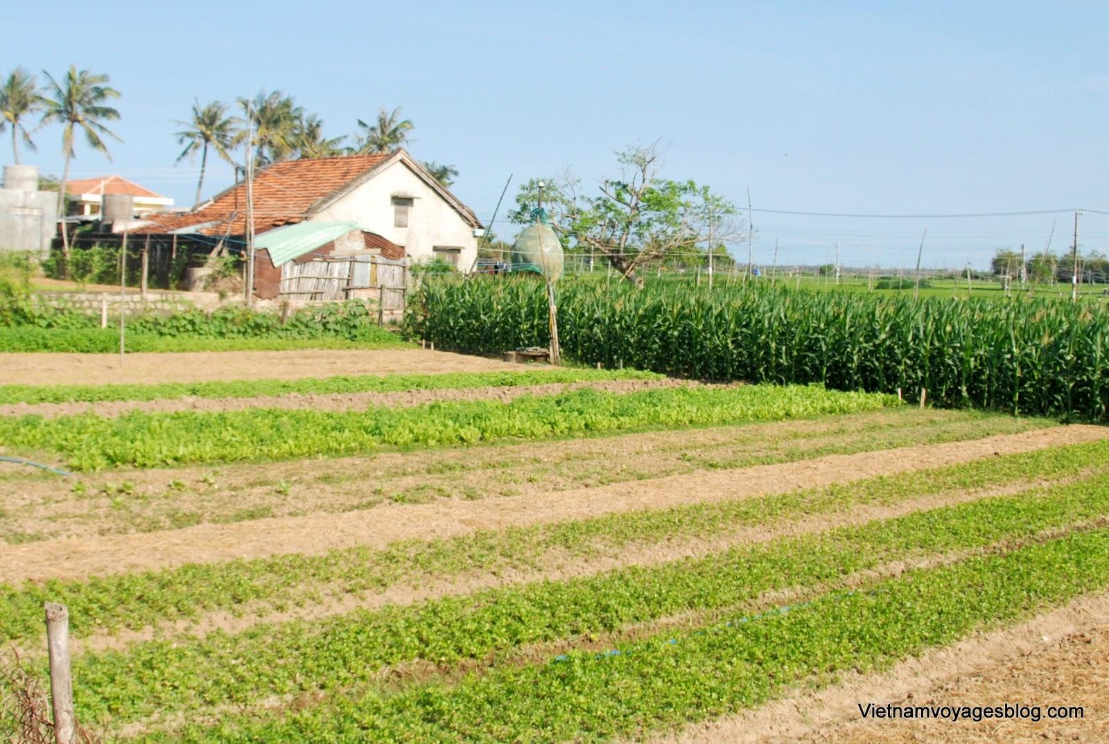 Tham quan làng rau Ngọc Lãng ở Phú Yên