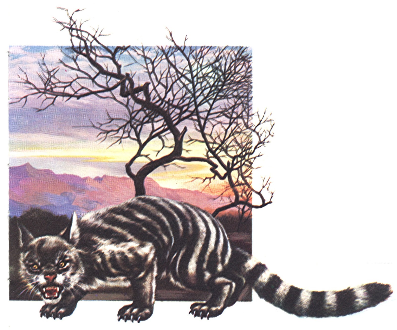 Is the Maltese blue tiger a myth or a reality