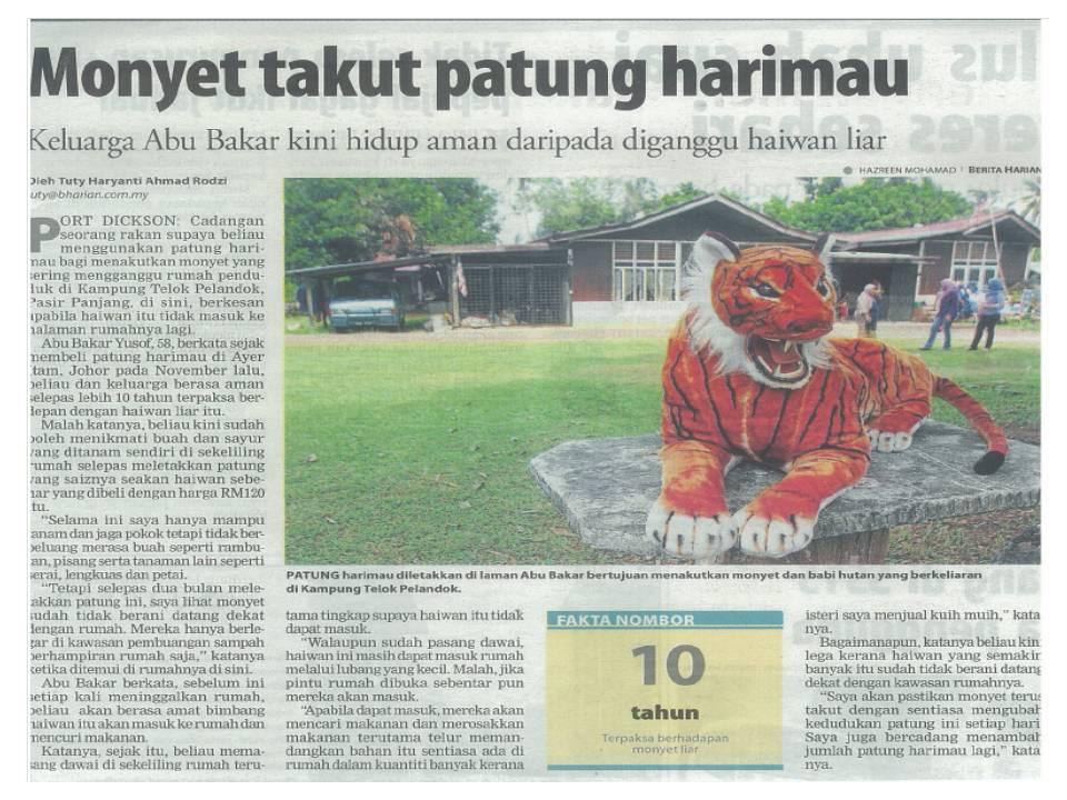 gambar hewan - foto harimau