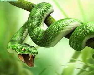 Las serpientes en los sueños