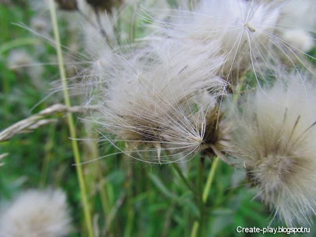 травы полей