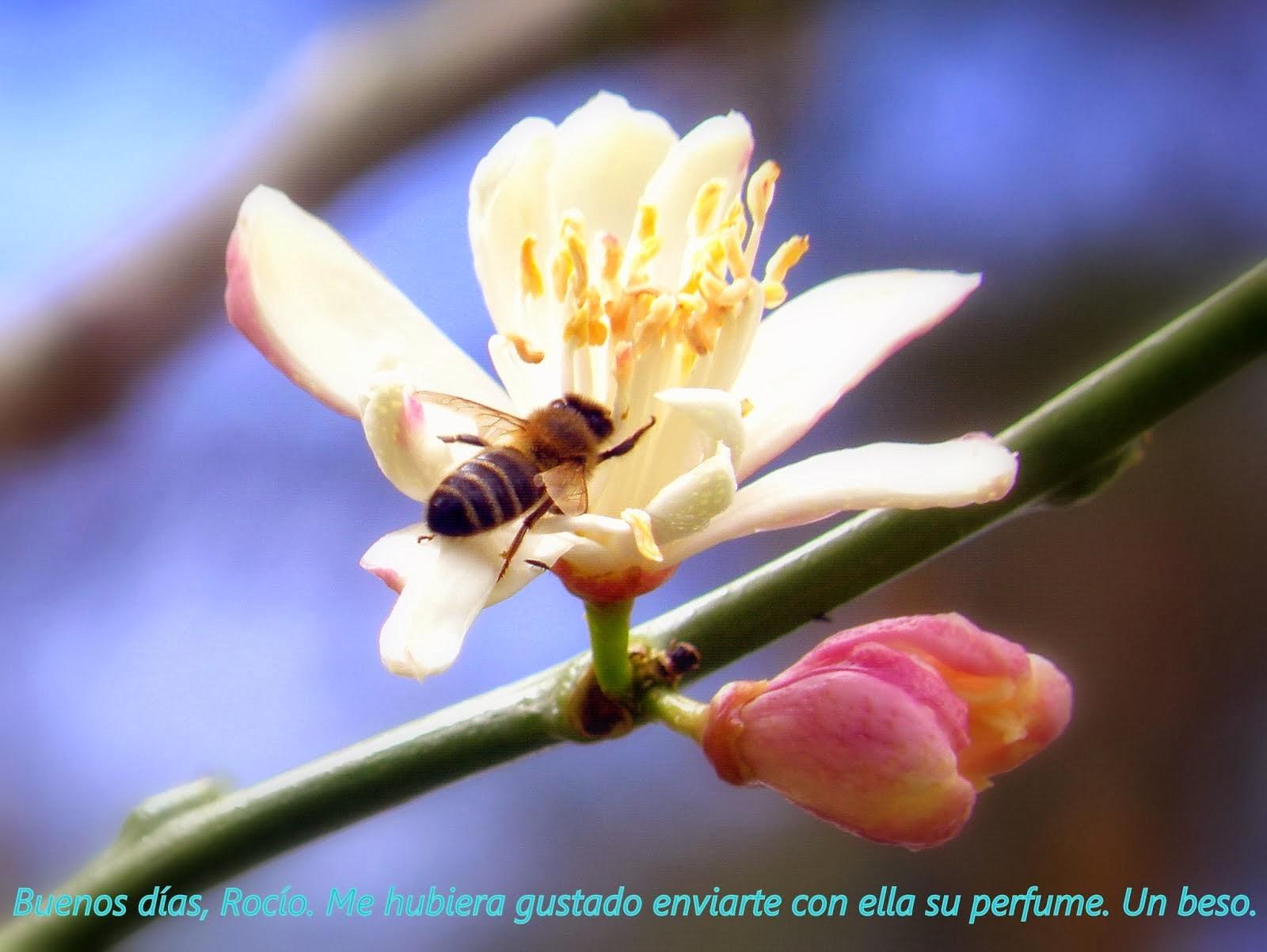 Flor de Febrero
