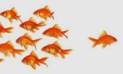 fish fishes orange,different way direction,Alone But Not Lonely