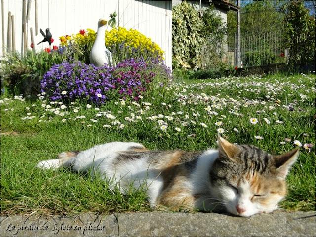 chat et paquerettes
