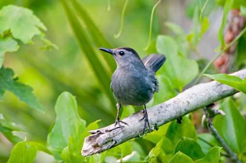 Different Kinds of Bir... Different Kinds Of Birds