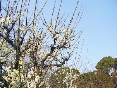 兵庫県・伊丹市 緑ヶ丘公園の梅と飛行機