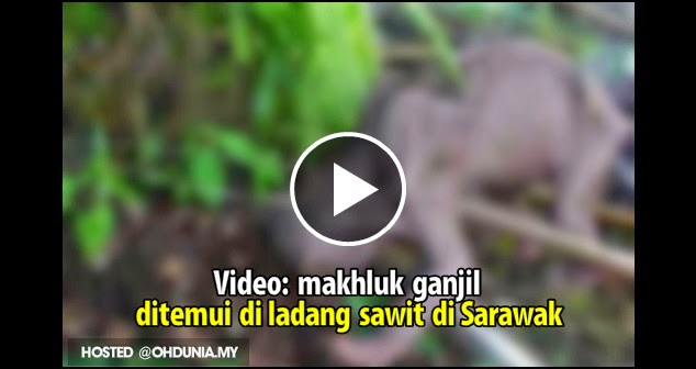 Video: Makhluk GANJIL dijumpai pekerja di ladang sawit di Sarawak !...