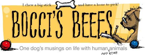 Pet Blog By Bocci @ Bocci's Beefs