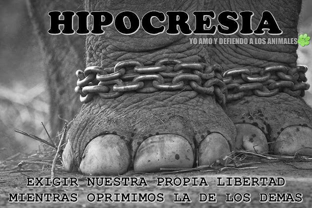 Hipocritas