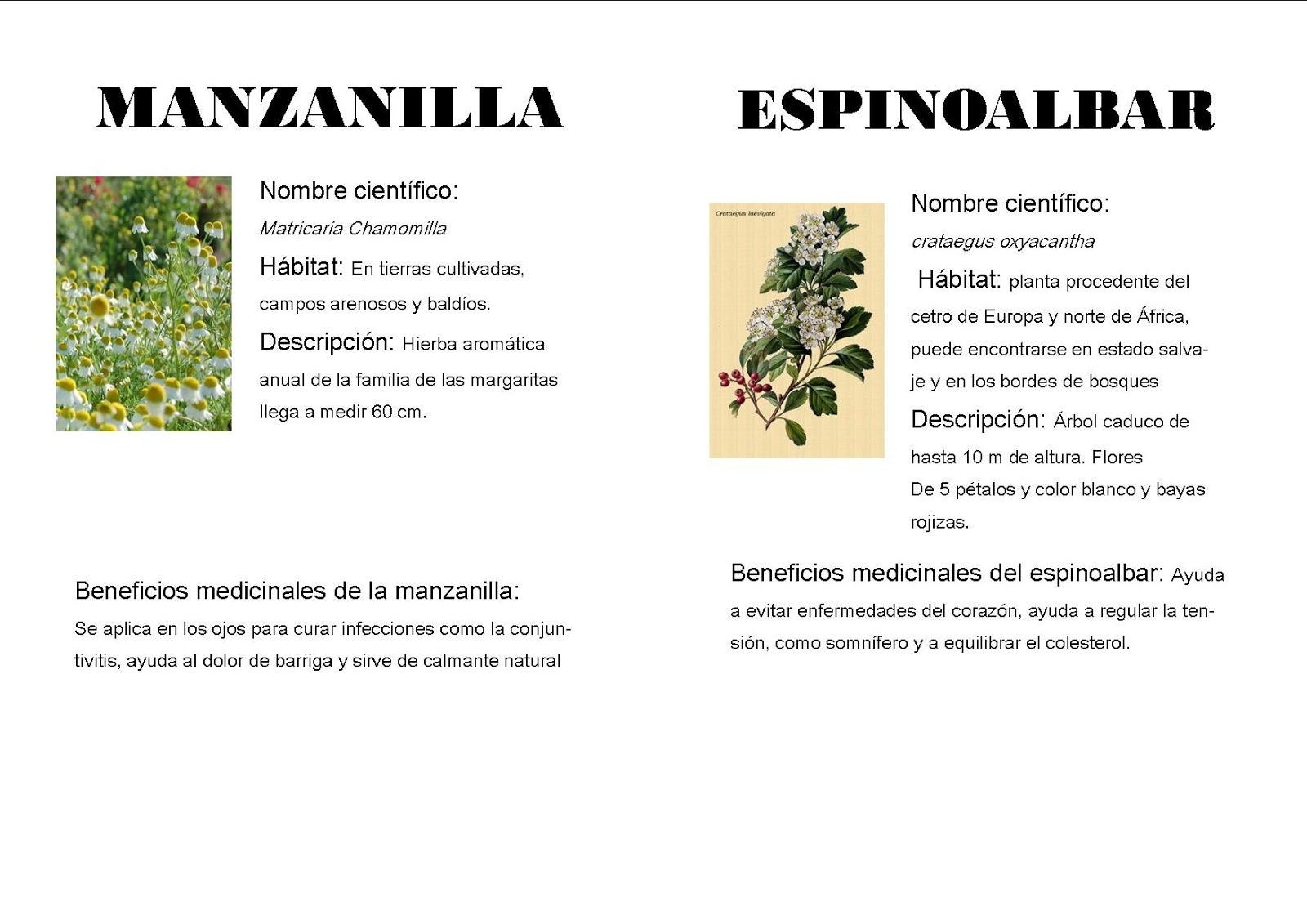 Plantas medicinales de puertomingalvo for Manzanilla planta medicinal para que sirve