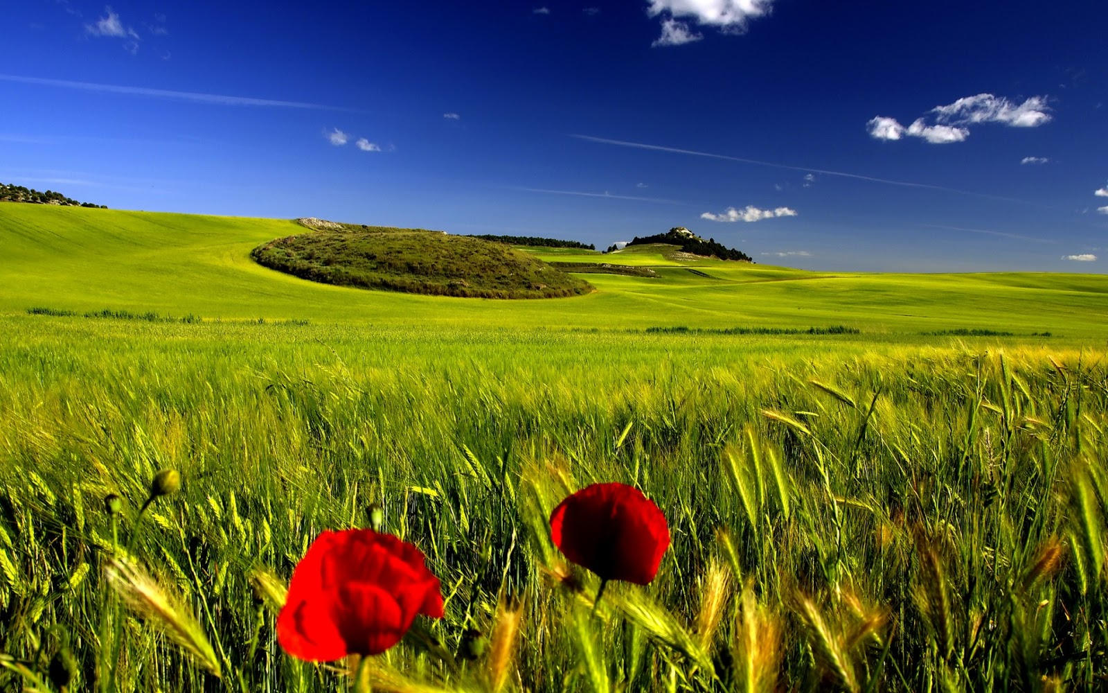 http://2.bp.blogspot.com/-Bprshp3a1Zw/UTNQMoYQhDI/AAAAAAAAVbU/DMsXtDz1uy0/s1600/Nature+Wallpaper+%5B1920X1200%5D+0027.jpg