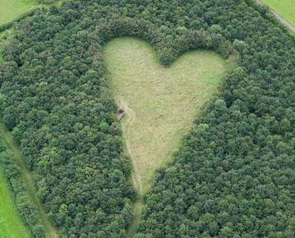 Srce kao prirodno čudo  151742029