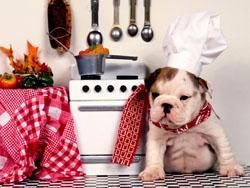 σωστος τροπος ταισματος σκυλου