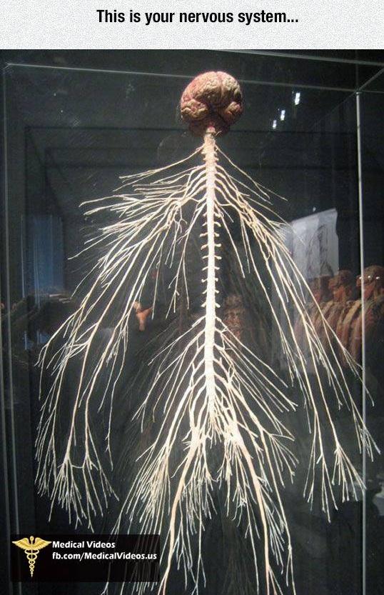 Интересный факт о человеческом теле