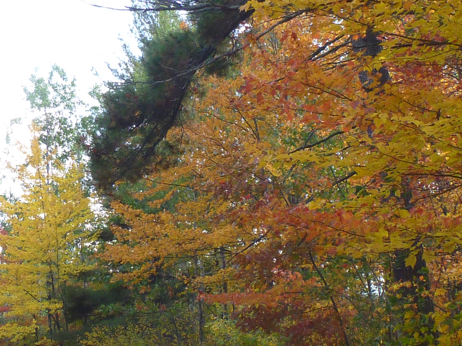 The Hairy Edge: THE COLOURS OF THANKSGIVING