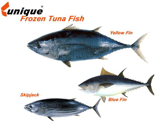 Fish r tuna fish and giant for Tuna fish can