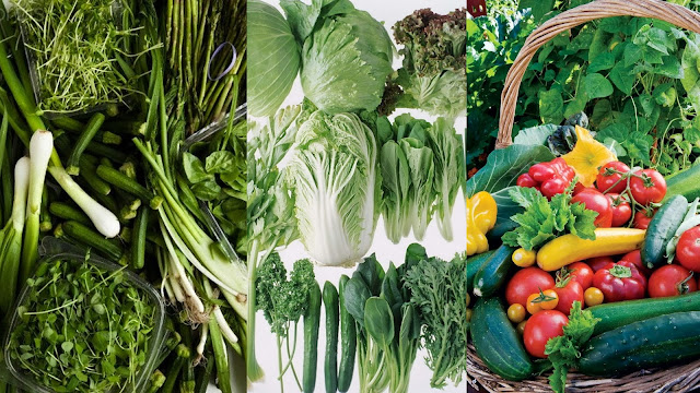 Green vegetables of winter season