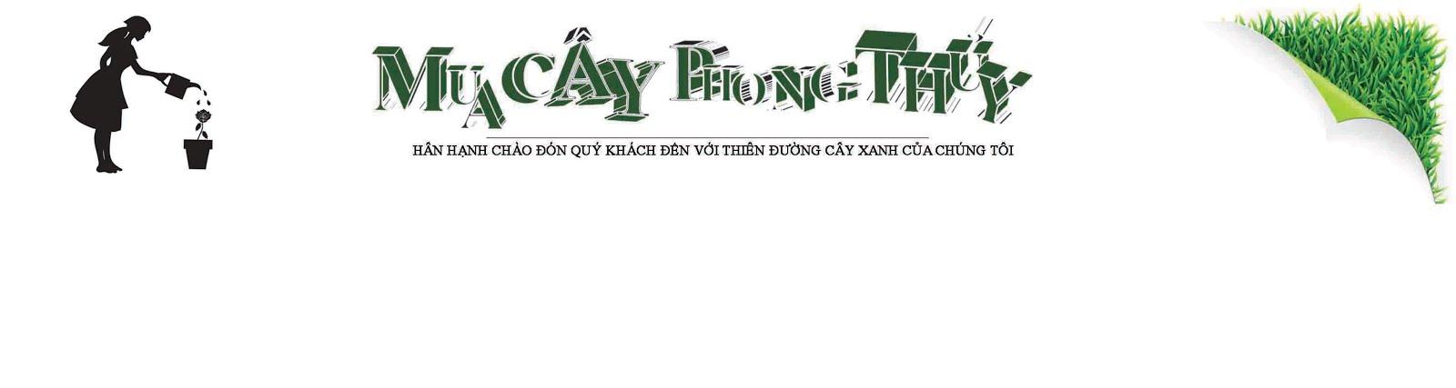 MUA CÂY PHONG THỦY