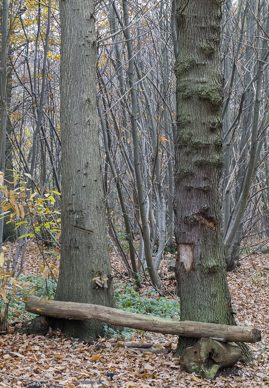 Crude memorial seat.  Farningham Wood, 28 November 2013.