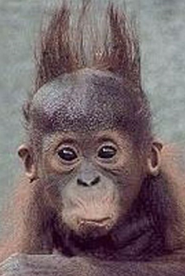 funny picture of monkey