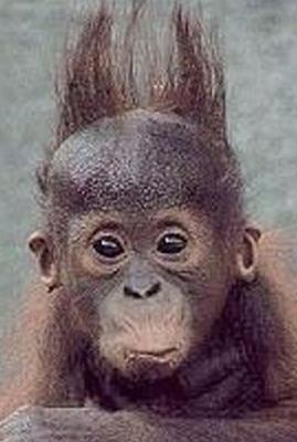 smjesne slike majmunce