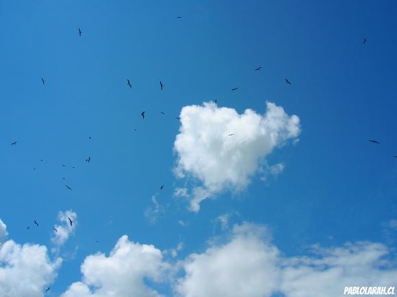blue sky with birds, Fregresia de Santana (Santana Church), Ilha Grande,Angra dos Reis,Rio de Janeiro,Brazil