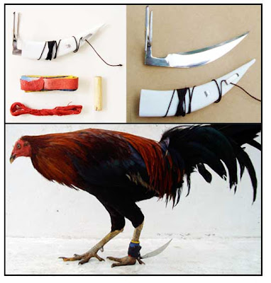 | Sabung Ayam Online | Sabung Ayam Terpercaya | Sabung Ayam Online Pisau Jalu |