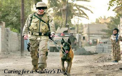 How to Caring for a Soldier's Pet