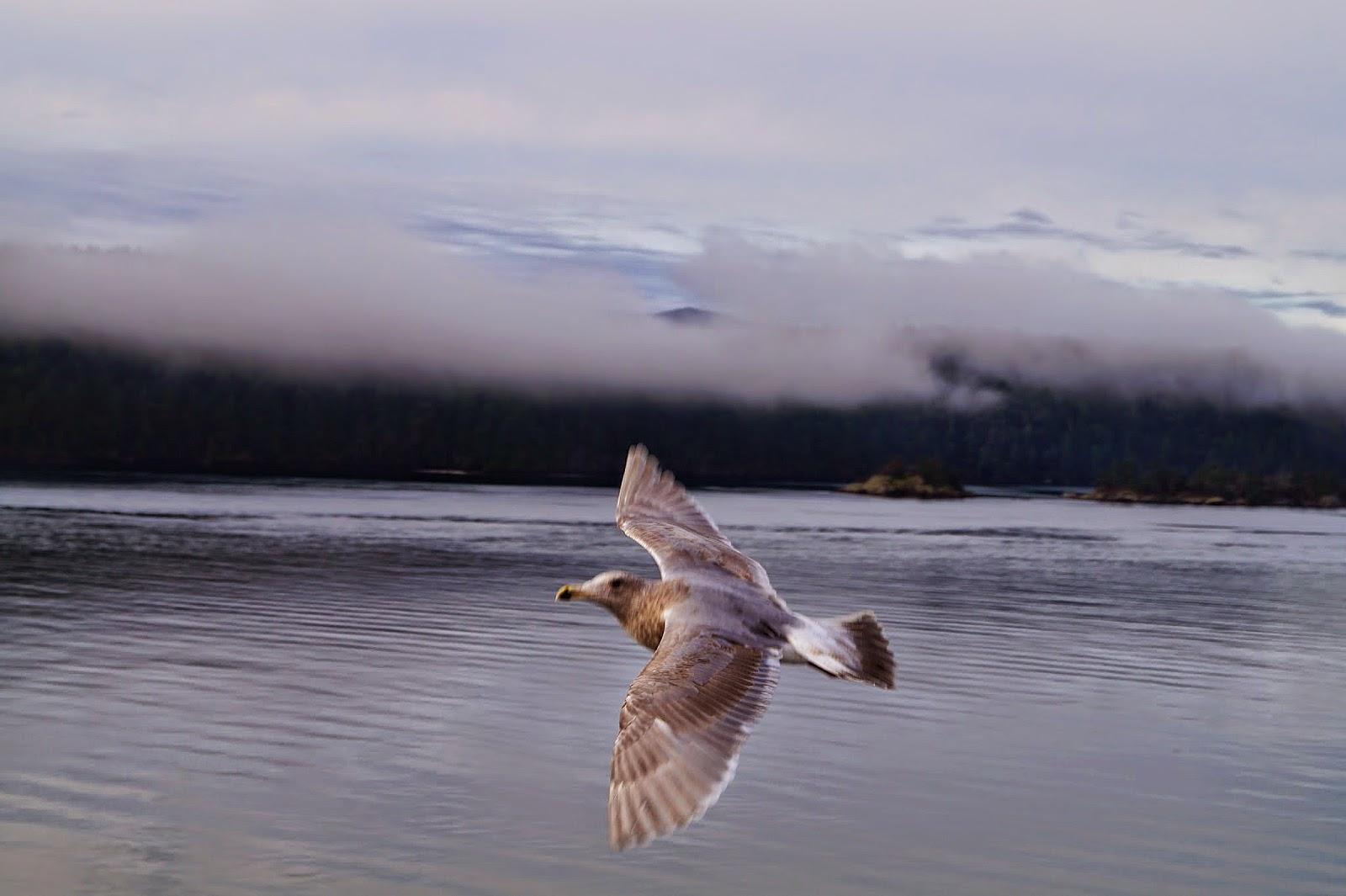 чайки, летящие рядом с паромом