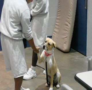 In partnership with Corridor Rescue, boys at the Harris County Leadership Academy learn to train and care for rescue dogs through Project H.E.E.L. Fourteen youth and six dog participated in the inaugural program and four of the dogs were adopted.