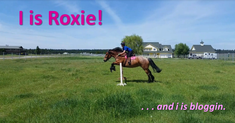 I is Roxie!