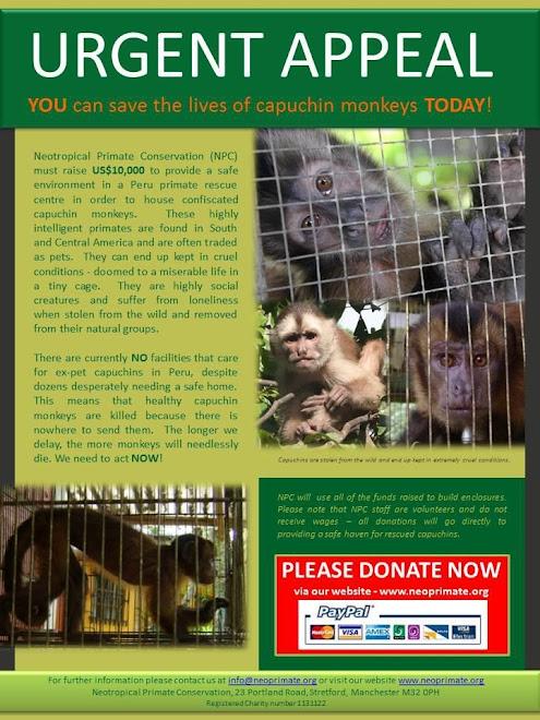 campanha da Neotropical Primate Conservation para arrecadar fundos para salvar macacos-prego no Peru