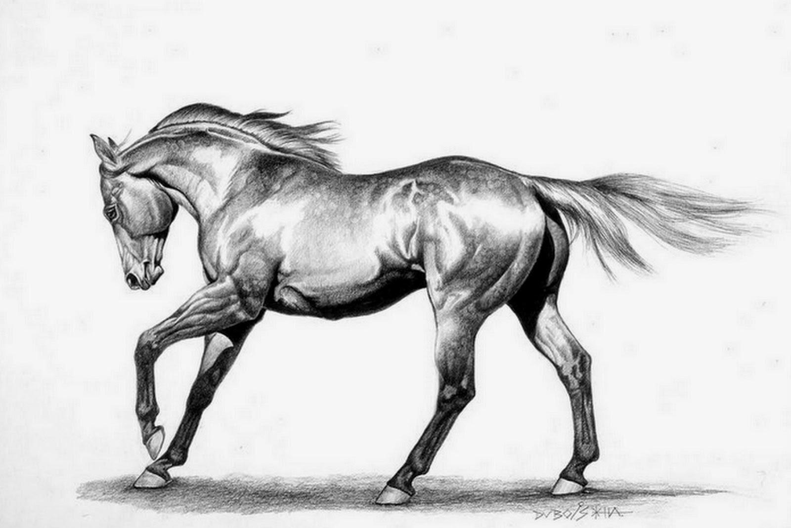 caballo-a-lapiz