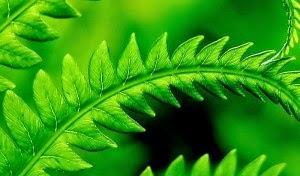 Dünyanın en faydalı bitkilerı