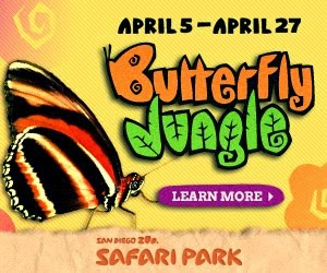 Come Welcome Spring with the Butterflies