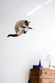 flying cat in room