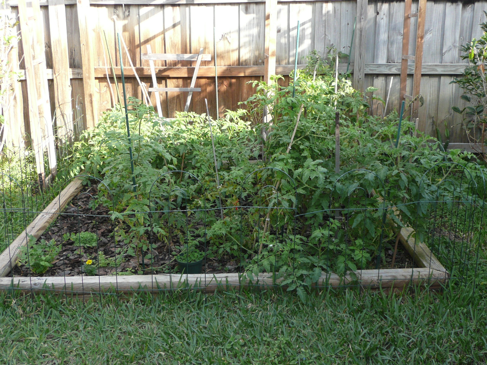 Gardening south florida style vegetable garden - South florida vegetable gardening ...