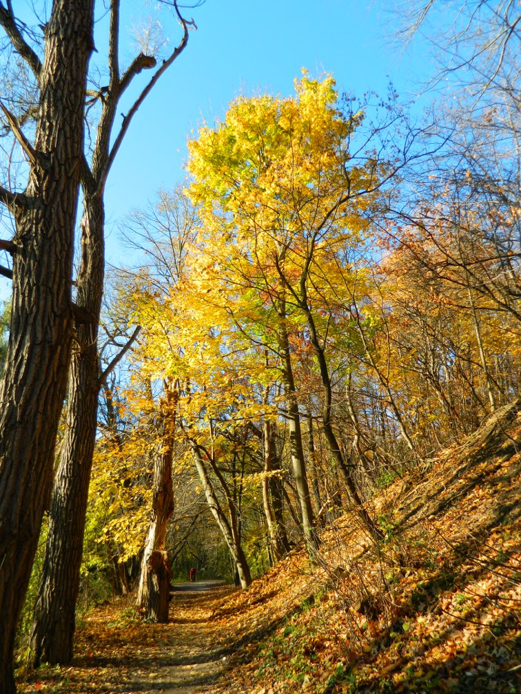 Fall foliage Taylor Creek Park by garden muses-not another Toronto gardening blog