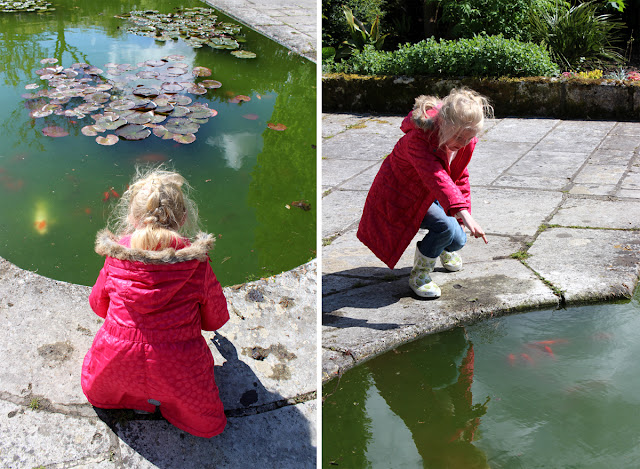 spotting-fish-pond-green-water-kingston-maurward-todaymyway.com