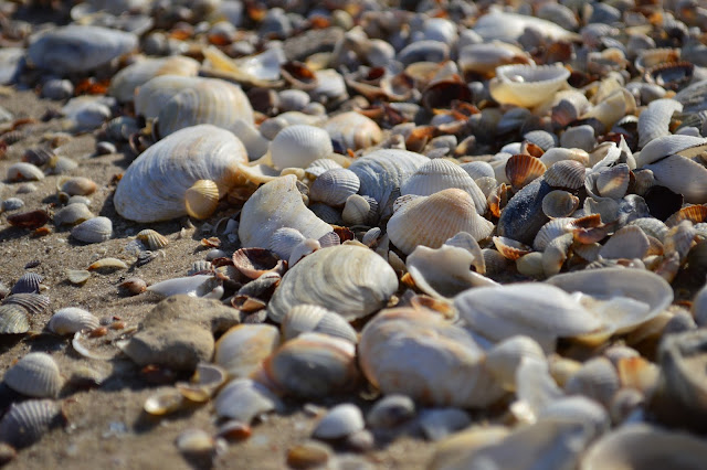 азовское море, степановка, отдых в степановке, море, отпуск, лето
