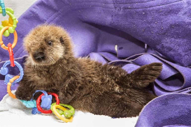 how to become a wildlife rehabilitator in california