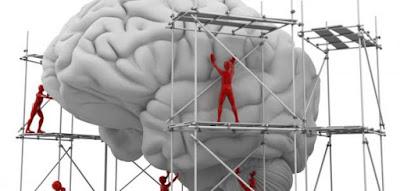 بناء المخ