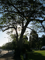 Photo Artigas tree prado Montevideo Uruguay