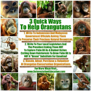 International Orangutan Day August 19th