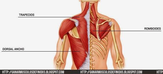 Anatomia De La Espalda -
